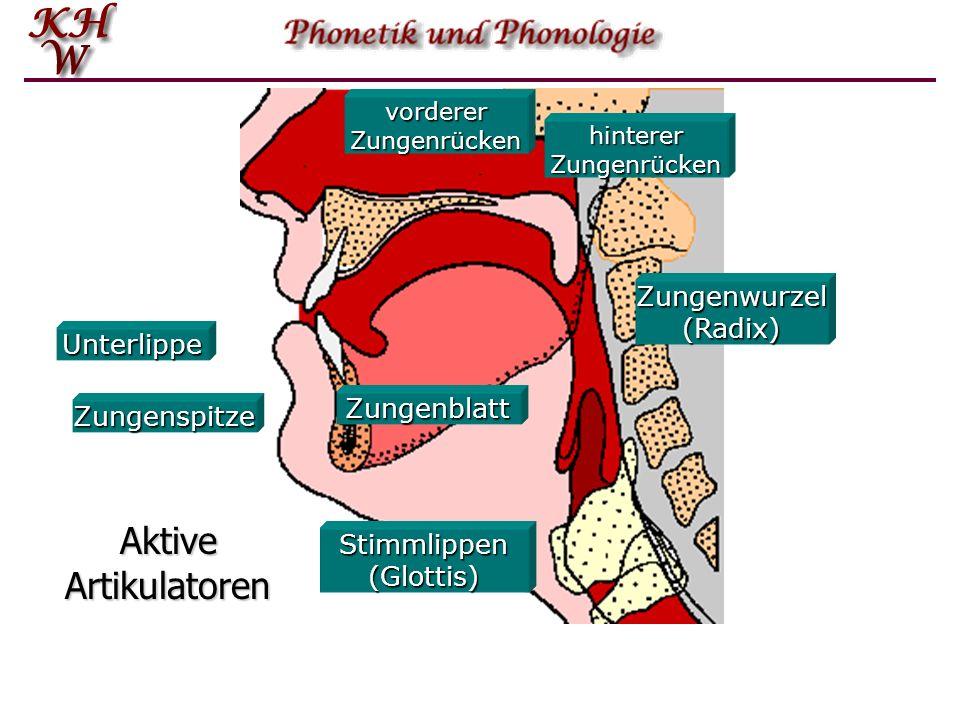Aktive Artikulatoren Zungenwurzel (Radix) Unterlippe Zungenblatt
