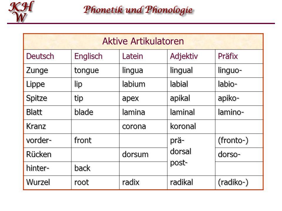 Aktive Artikulatoren Deutsch Englisch Latein Adjektiv Präfix Zunge