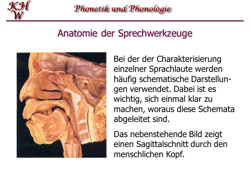 Nett Nervensystem Ppt Anatomie Und Physiologie Ppt Bilder ...