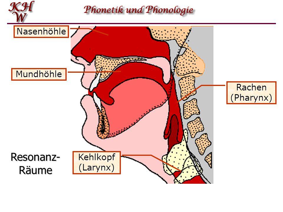 Resonanz-Räume Nasenhöhle Mundhöhle Rachen (Pharynx) Kehlkopf (Larynx)