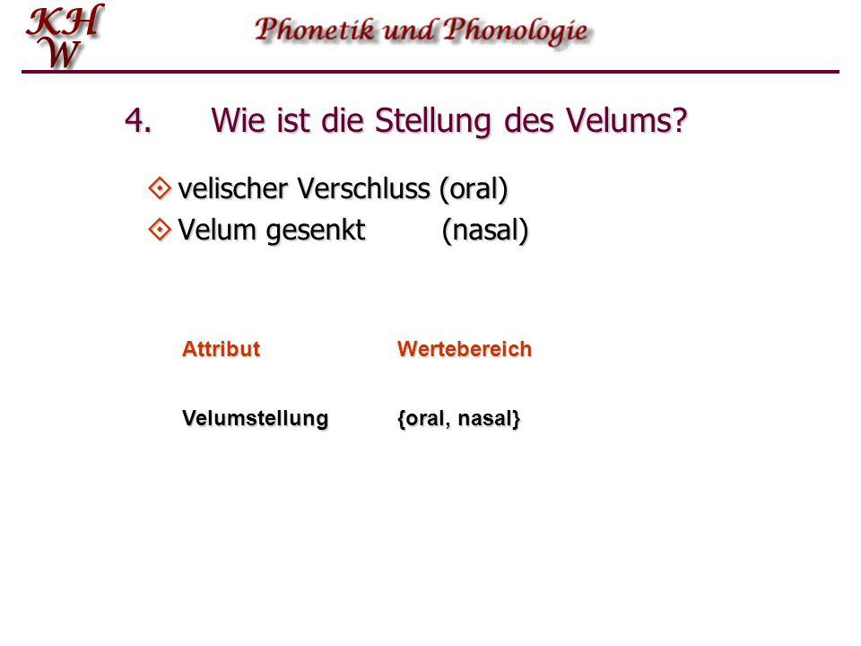 4. Wie ist die Stellung des Velums