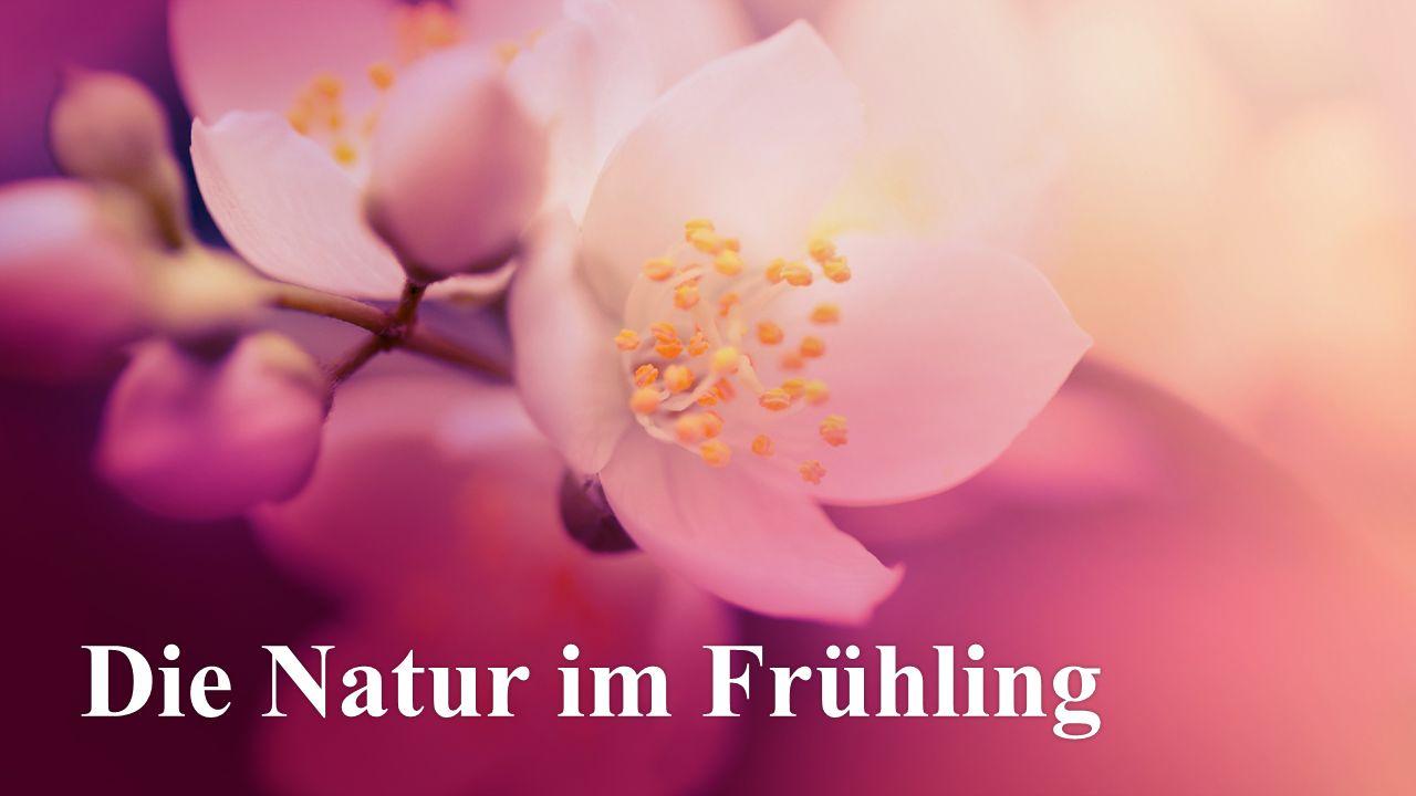 Die Natur im Frühling