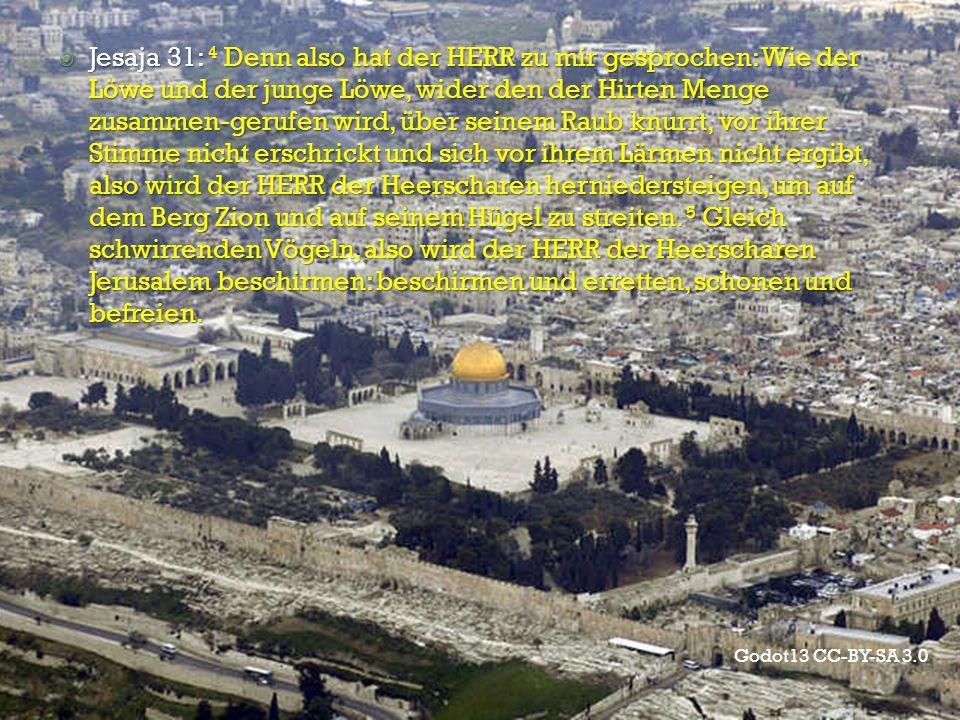 Jesaja 31: 4 Denn also hat der HERR zu mir gesprochen: Wie der Löwe und der junge Löwe, wider den der Hirten Menge zusammen-gerufen wird, über seinem Raub knurrt, vor ihrer Stimme nicht erschrickt und sich vor ihrem Lärmen nicht ergibt, also wird der HERR der Heerscharen herniedersteigen, um auf dem Berg Zion und auf seinem Hügel zu streiten. 5 Gleich schwirrenden Vögeln, also wird der HERR der Heerscharen Jerusalem beschirmen: beschirmen und erretten, schonen und befreien.