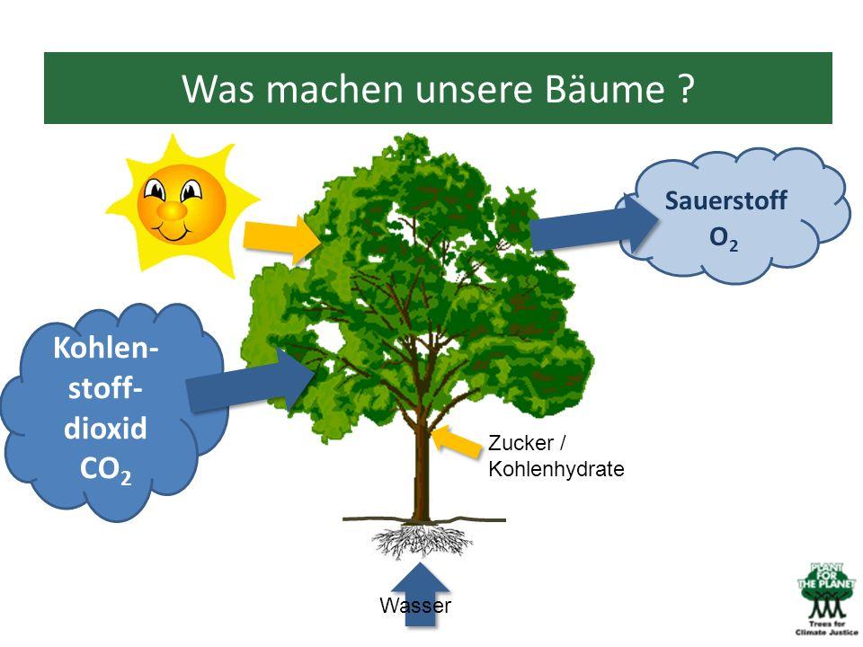 Was machen unsere Bäume