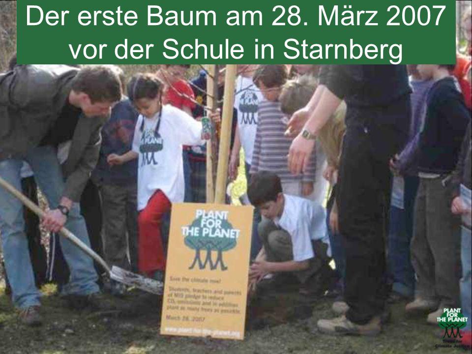 Der erste Baum am 28. März 2007 vor der Schule in Starnberg