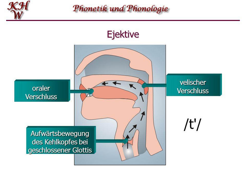Aufwärtsbewegung des Kehlkopfes bei geschlossener Glottis