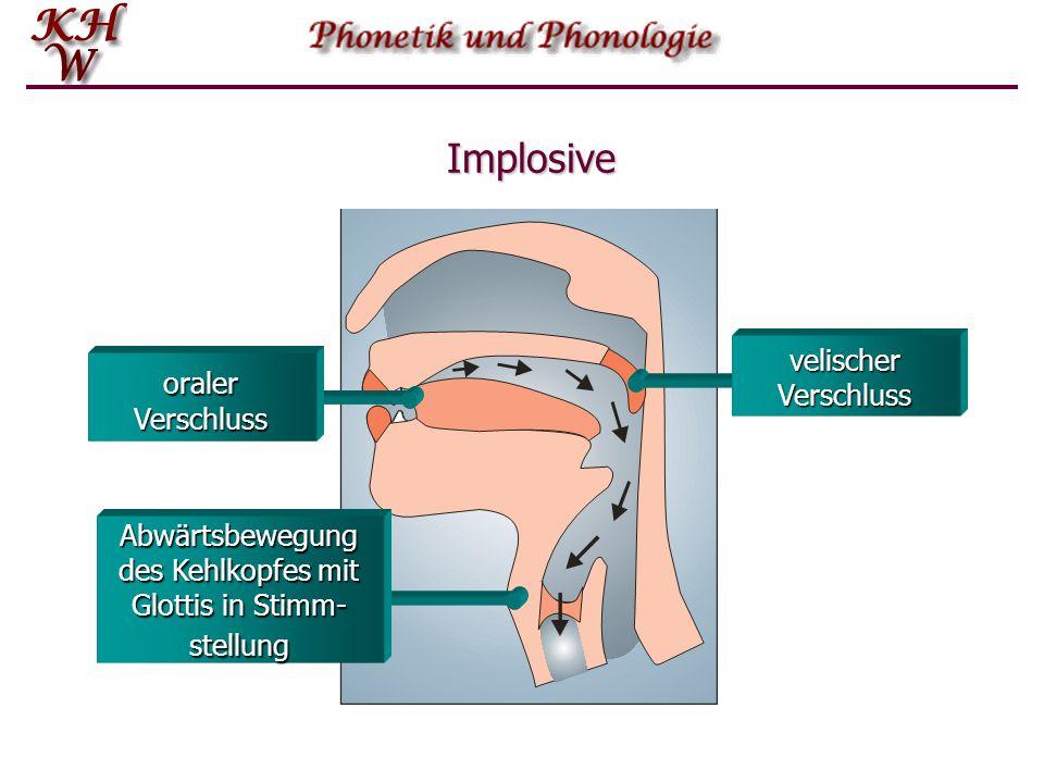 Abwärtsbewegung des Kehlkopfes mit Glottis in Stimm-stellung