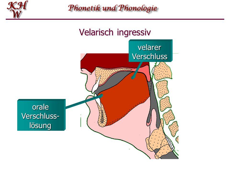 orale Verschluss-lösung