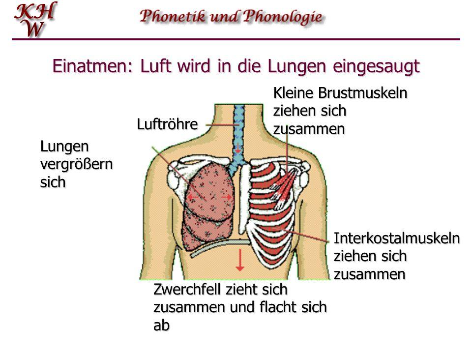 Einatmen: Luft wird in die Lungen eingesaugt
