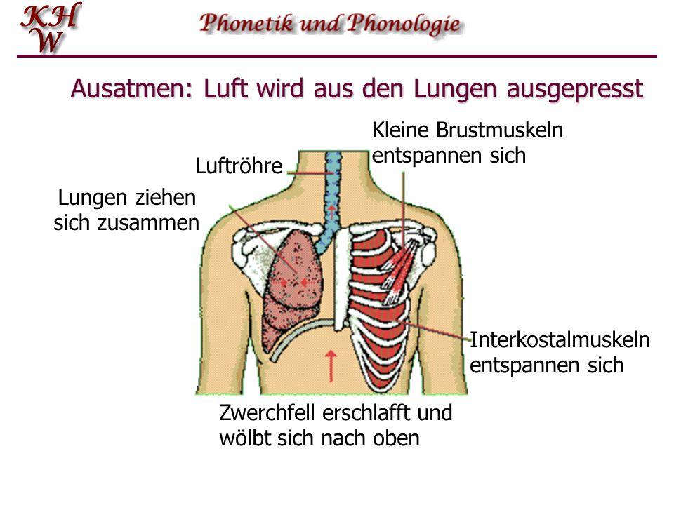 Ausatmen: Luft wird aus den Lungen ausgepresst