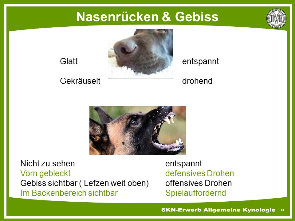Nasenrücken & Gebiss Glatt entspannt Gekräuselt drohend