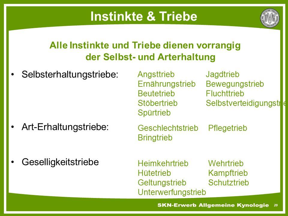 Instinkte & Triebe Alle Instinkte und Triebe dienen vorrangig der Selbst- und Arterhaltung. Selbsterhaltungstriebe: