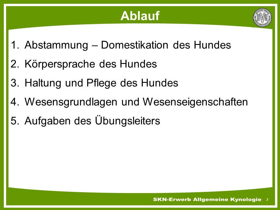 Körpersprache Des Hundes Arbeitsblatt : Skn erwerb allgemeine kynologie und grundausbildung ppt