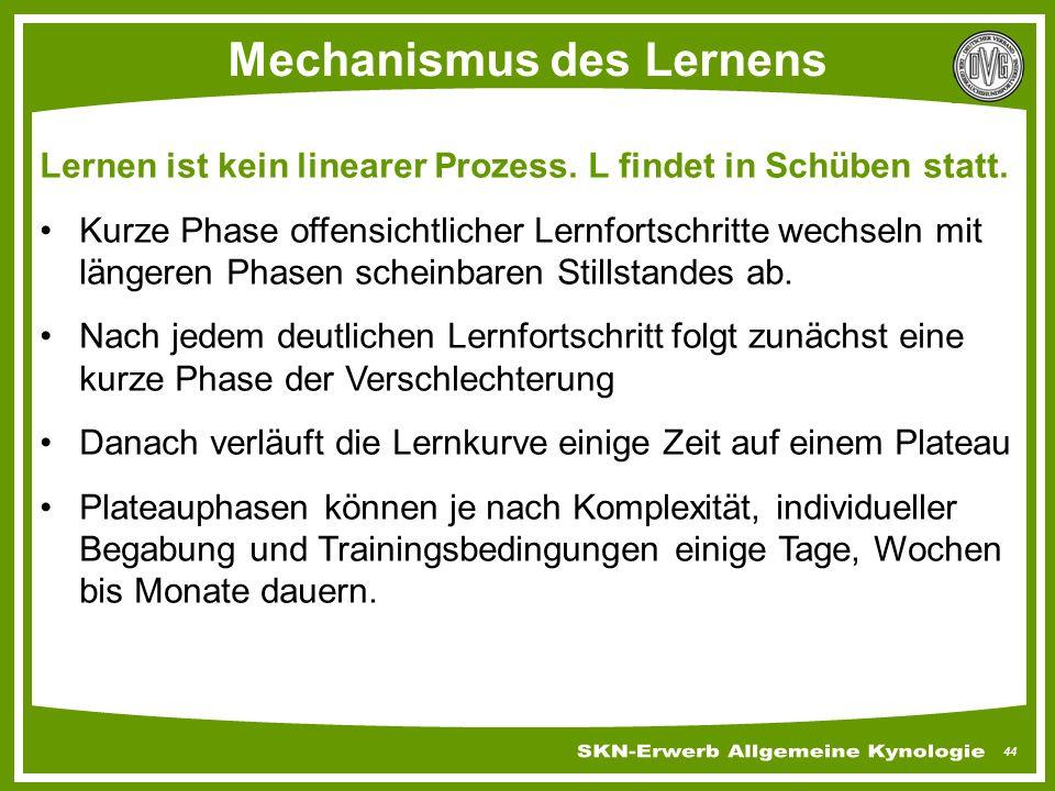 Mechanismus des Lernens