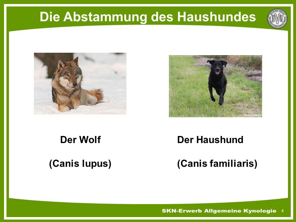 Die Abstammung des Haushundes