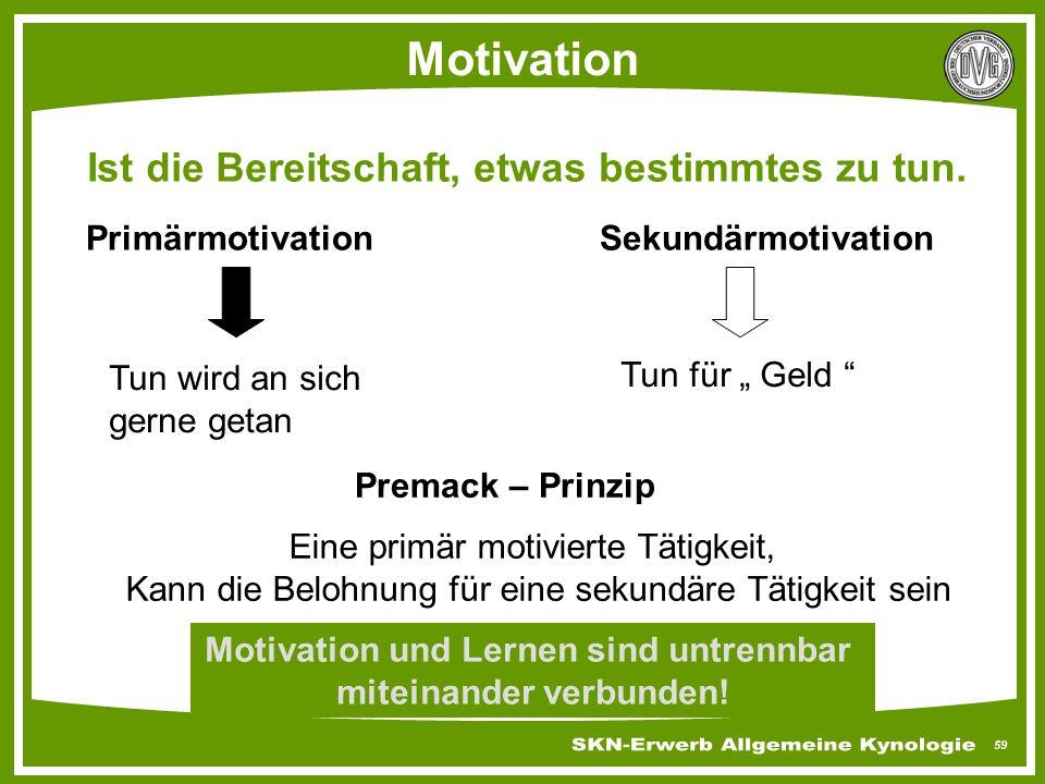 Motivation und Lernen sind untrennbar miteinander verbunden!