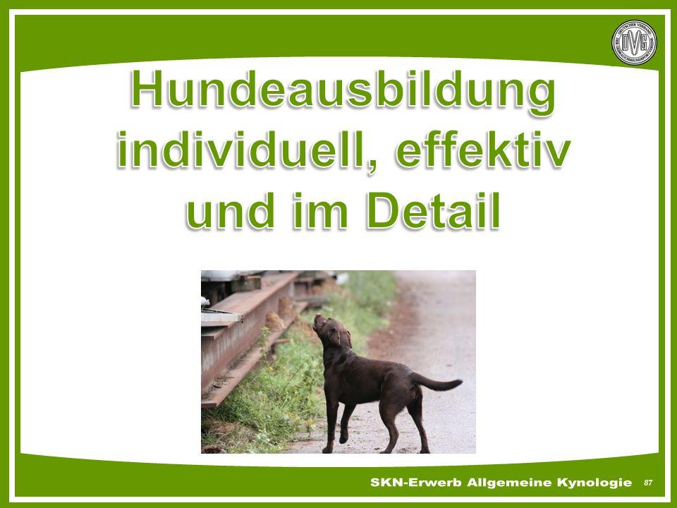 Hundeausbildung individuell, effektiv und im Detail