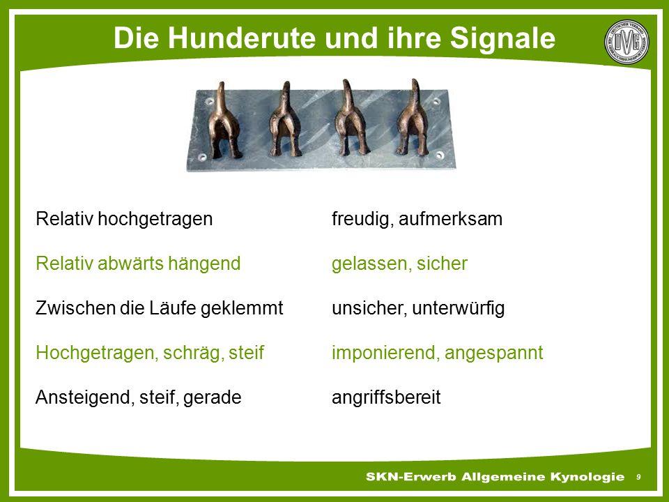 Die Hunderute und ihre Signale