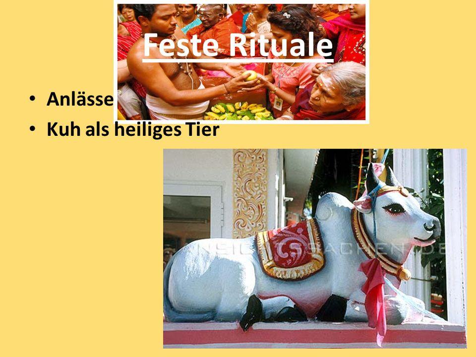 Feste Rituale Anlässe Kuh als heiliges Tier