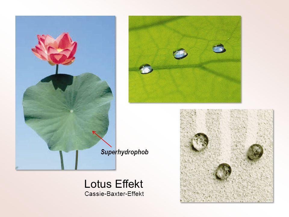 Superhydrophob Lotus Effekt Cassie-Baxter-Effekt