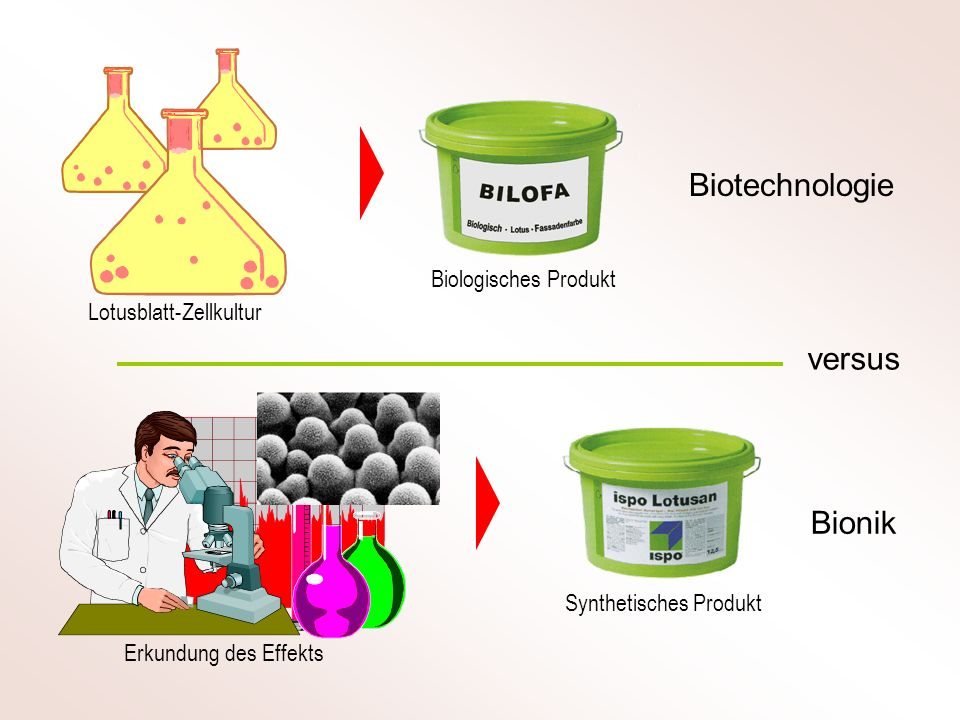 Biotechnologie versus Bionik Biologisches Produkt