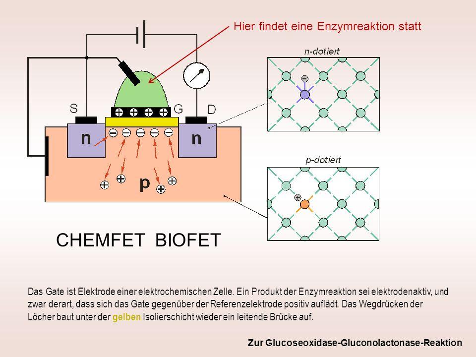 CHEMFET BIOFET Hier findet eine Enzymreaktion statt