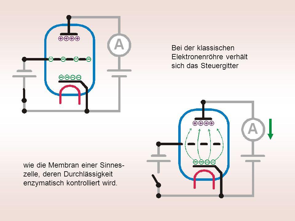 Bei der klassischen Elektronenröhre verhält sich das Steuergitter