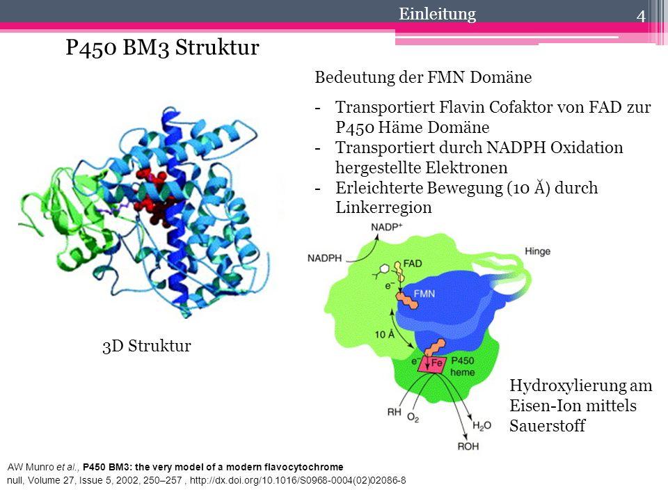 P450 BM3 Struktur Einleitung Bedeutung der FMN Domäne