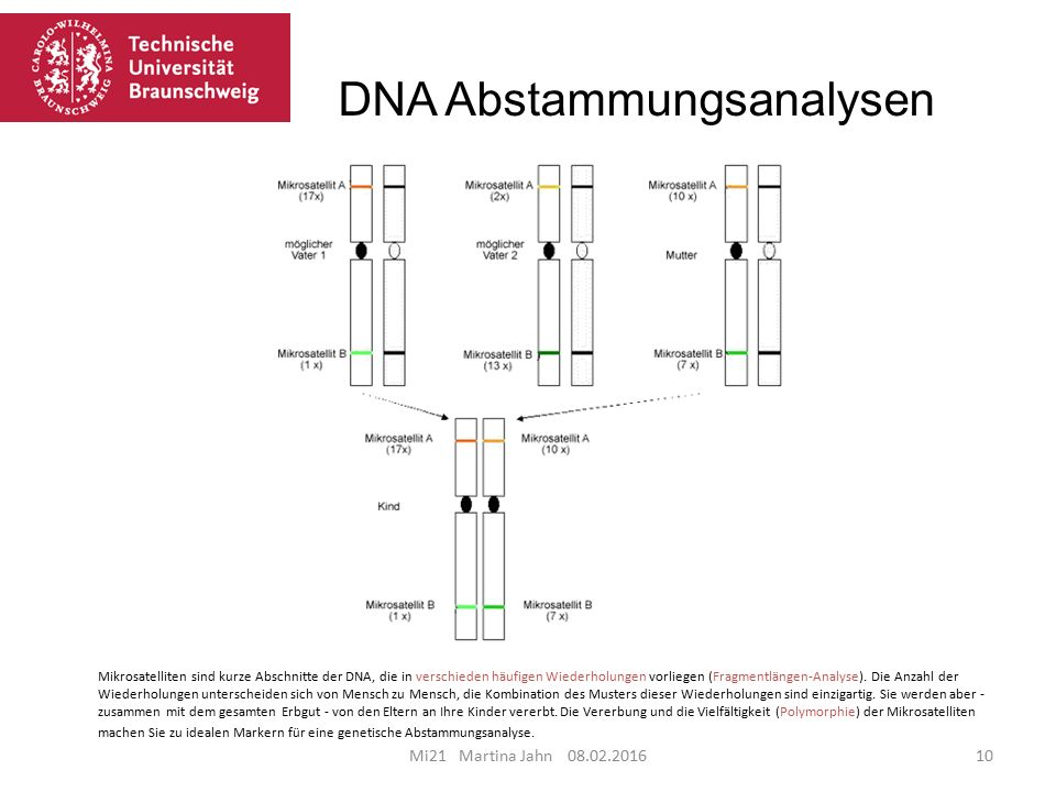 DNA Abstammungsanalysen