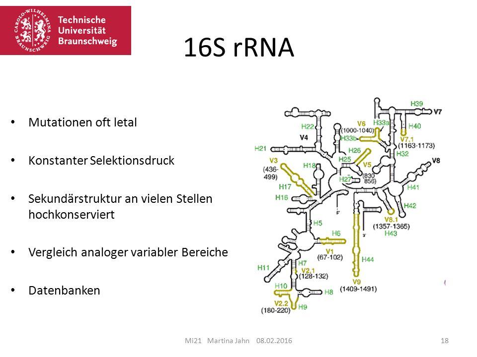 16S rRNA Mutationen oft letal Konstanter Selektionsdruck
