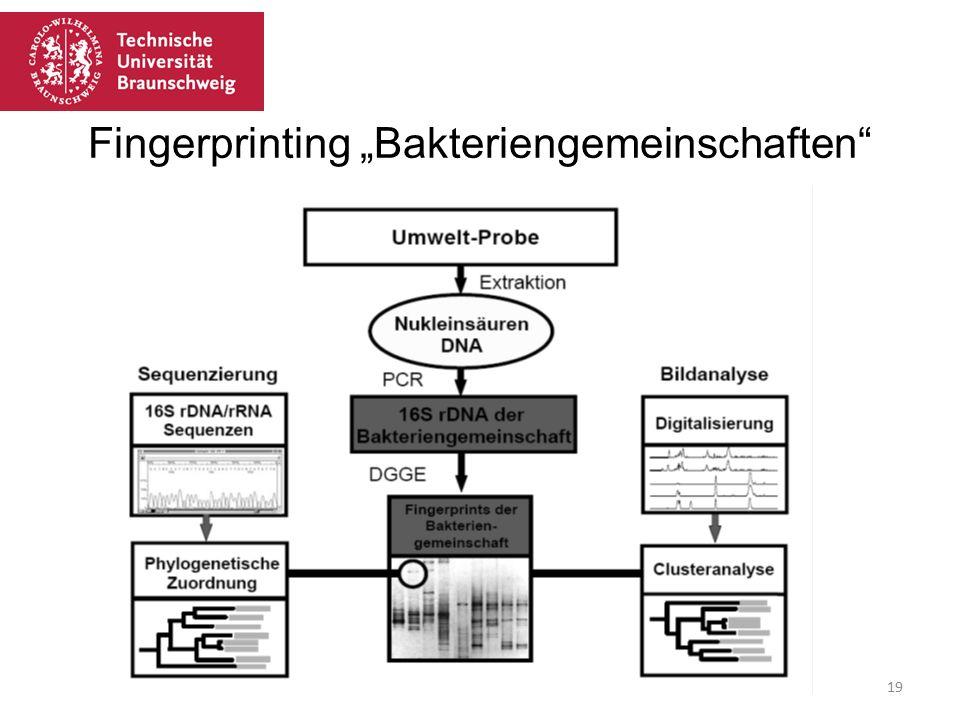 """Fingerprinting """"Bakteriengemeinschaften"""