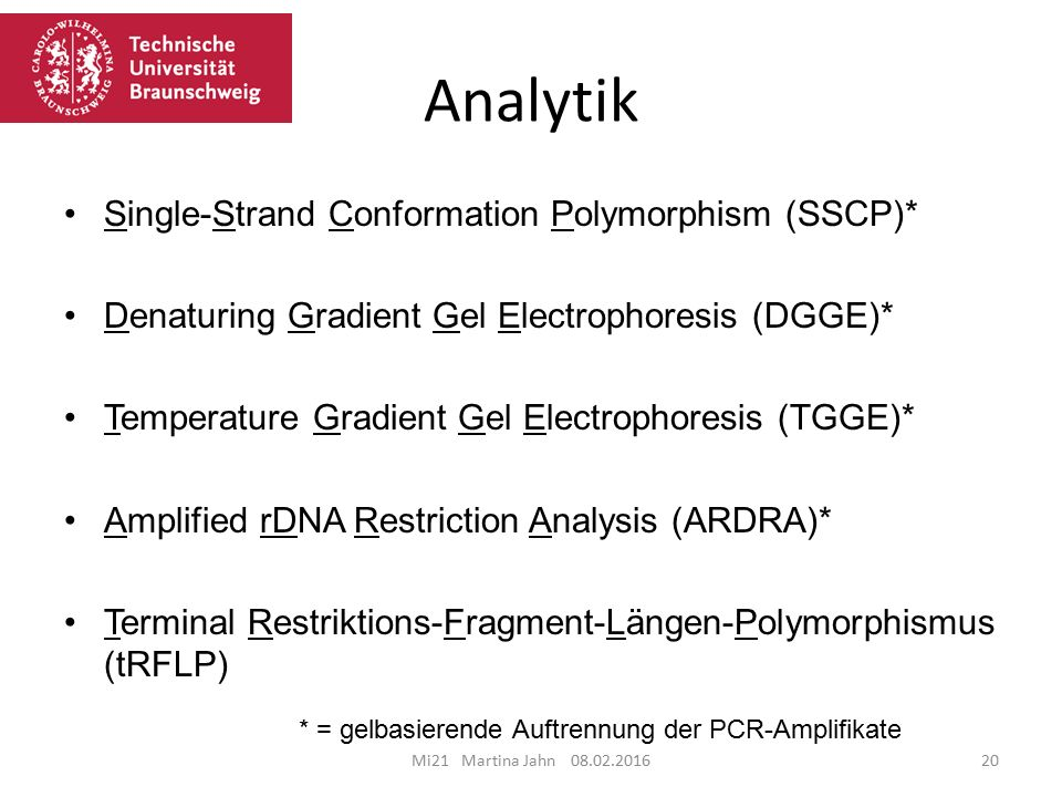 Analytik Single-Strand Conformation Polymorphism (SSCP)*