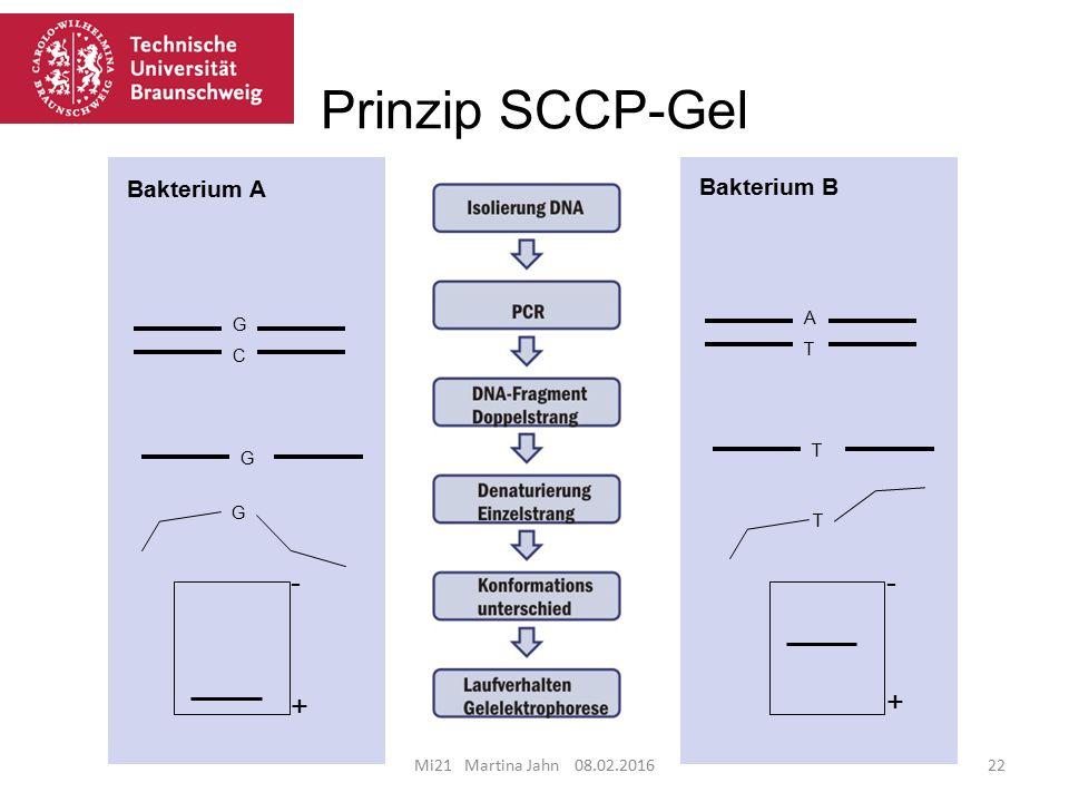 Prinzip SCCP-Gel - + Bakterium A Bakterium B A G T C