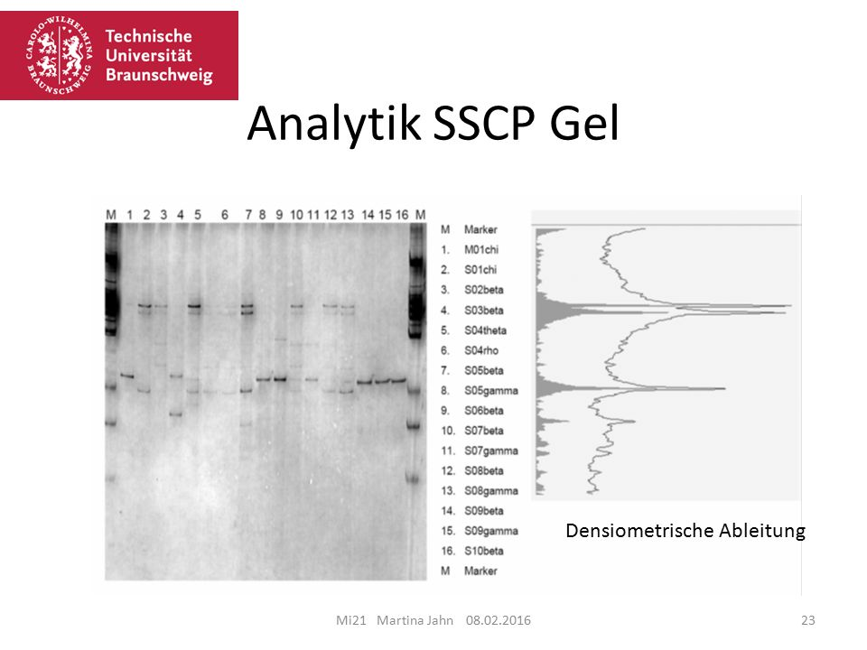 Analytik SSCP Gel Densiometrische Ableitung