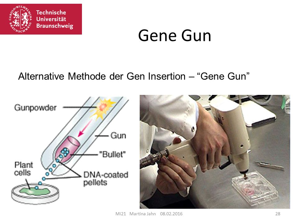 Gene Gun Alternative Methode der Gen Insertion – Gene Gun