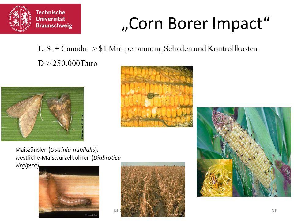 """""""Corn Borer Impact U.S. + Canada: > $1 Mrd per annum, Schaden und Kontrollkosten. D > 250.000 Euro."""