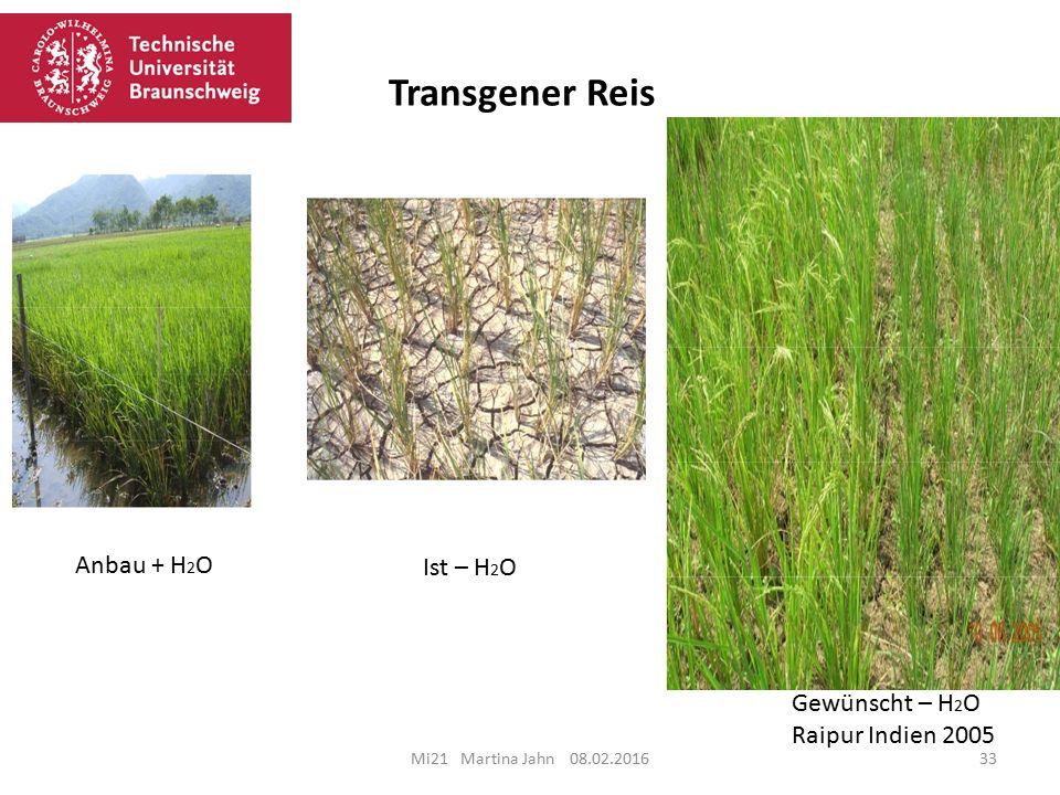 Transgener Reis Anbau + H2O Ist – H2O Gewünscht – H2O