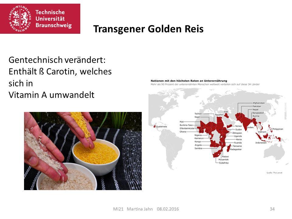 Transgener Golden Reis