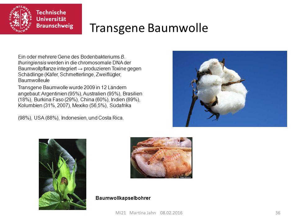 Transgene Baumwolle