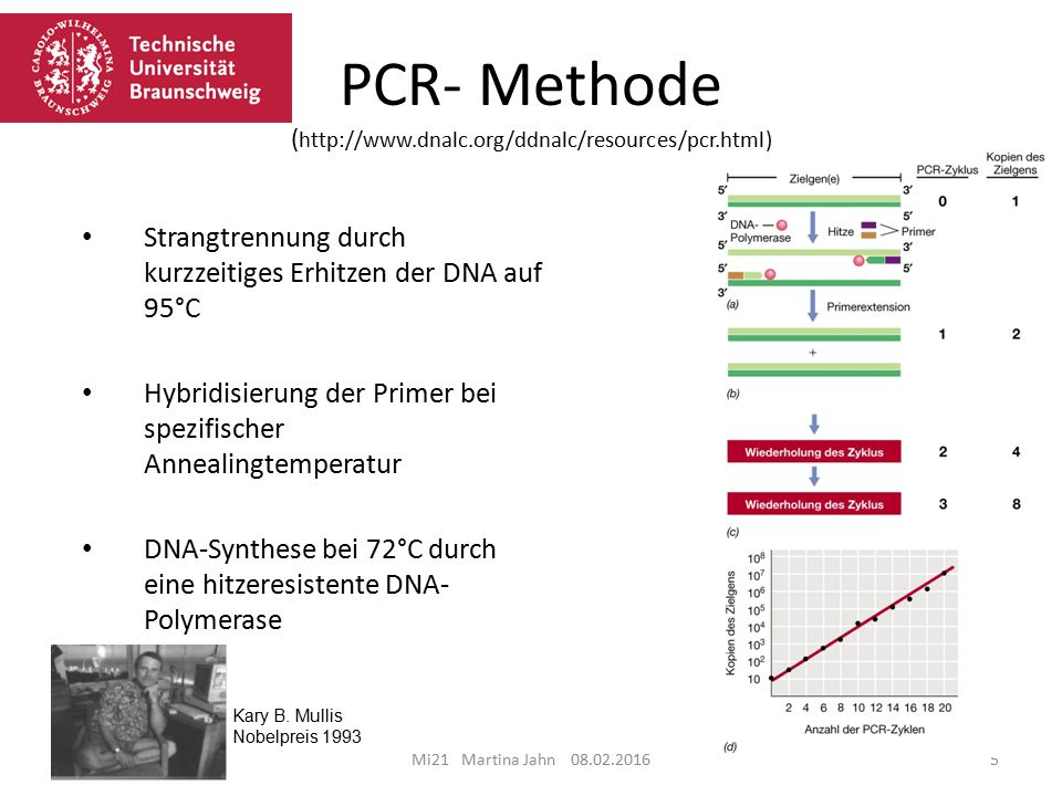 PCR- Methode (
