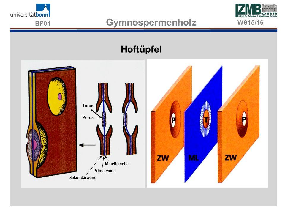 BP01 Gymnospermenholz Hoftüpfel WS15/16 Torus Porus Mittellamelle