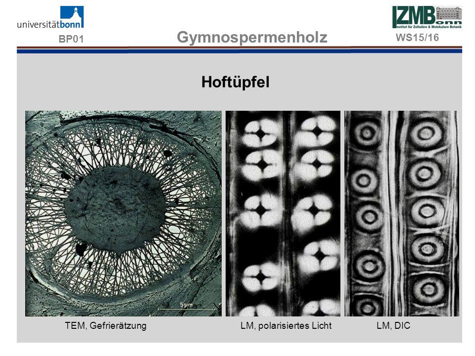 BP01 Gymnospermenholz Hoftüpfel WS15/16 TEM, Gefrierätzung