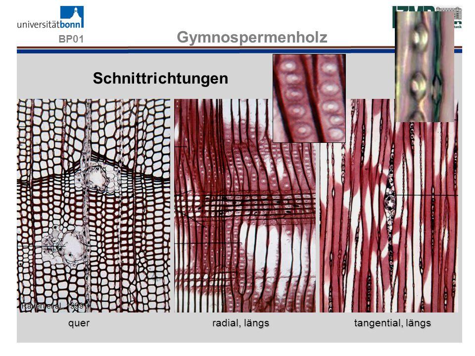 BP01 Gymnospermenholz Schnittrichtungen WS13/14 quer radial, längs