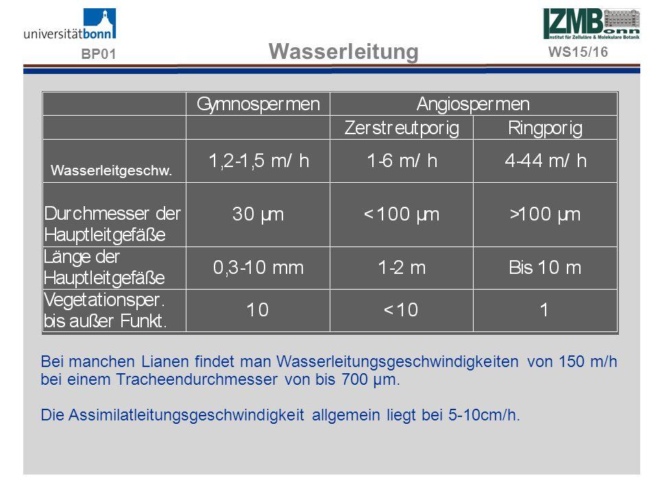BP01 Wasserleitung WS15/16. Wasserleitgeschw.