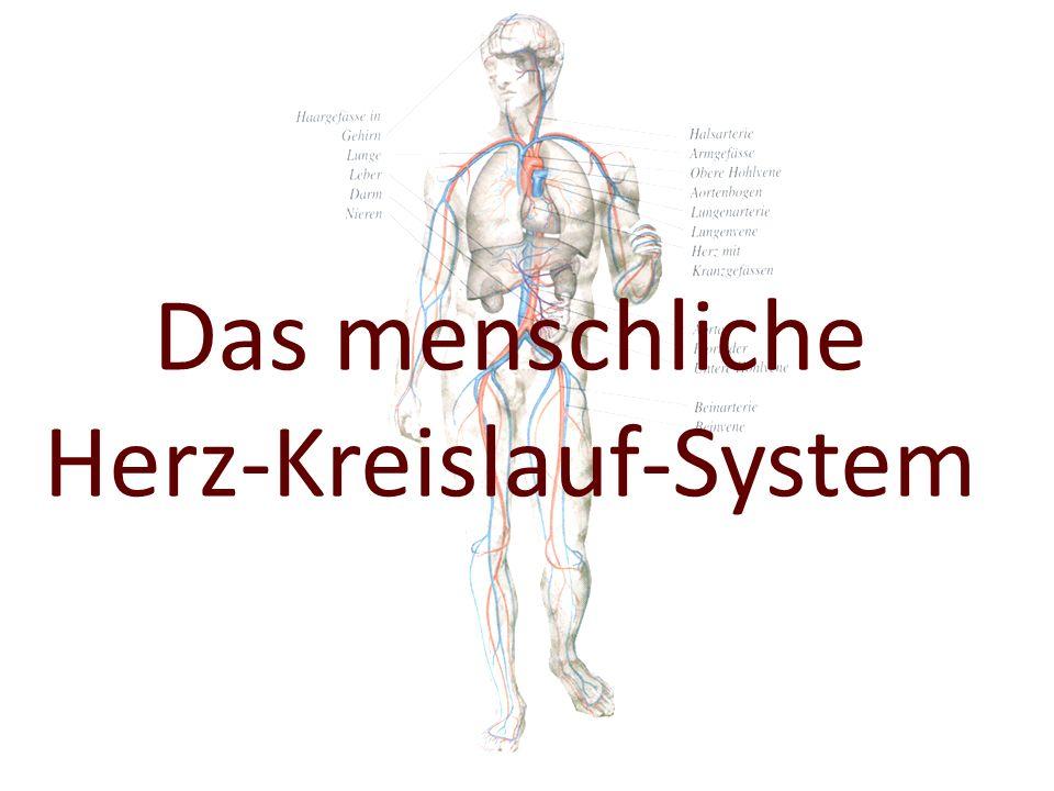 Sport in der Prävention: Ausdauer (Wolfgang Klingebiel)