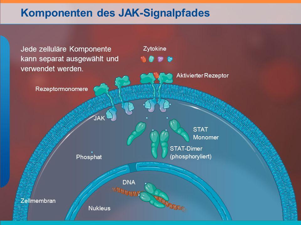 Komponenten des JAK-Signalpfades