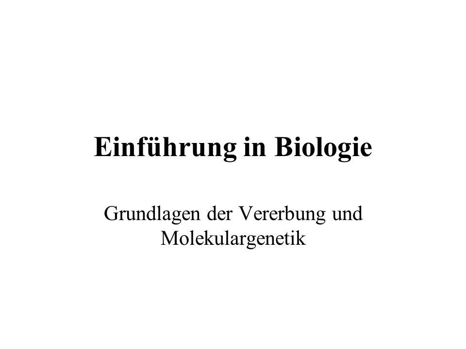 Einführung in Biologie