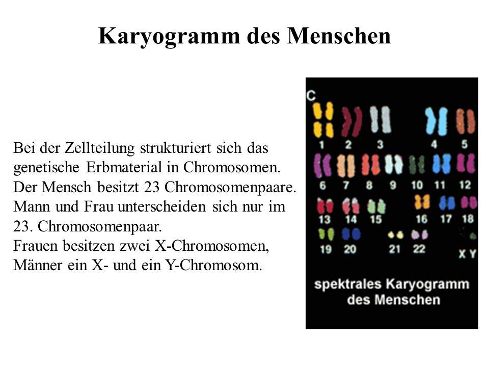 Karyogramm des Menschen