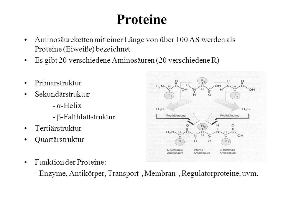 Proteine Aminosäureketten mit einer Länge von über 100 AS werden als Proteine (Eiweiße) bezeichnet.