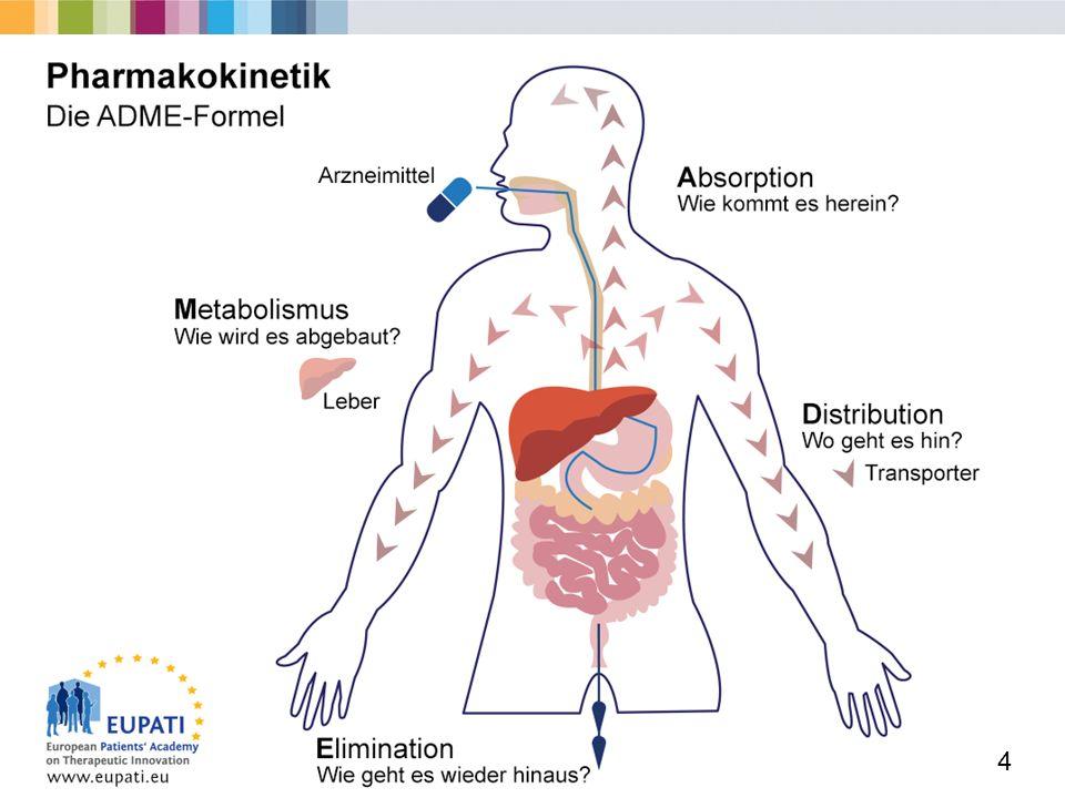 Atemberaubend Organe Atmungssystem Bilder - Anatomie Ideen - finotti ...